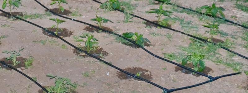 Капельный полив для малины своими руками видео